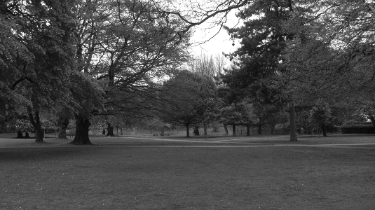 Picture of Acton Park