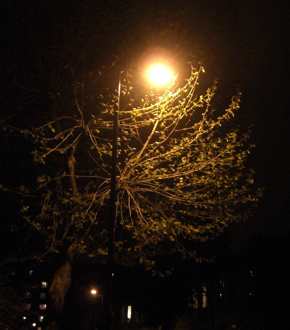 Picture street light and tree